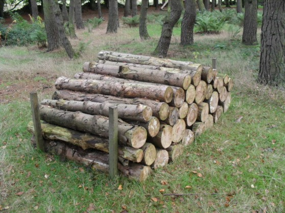 A-Pile-of-Logs