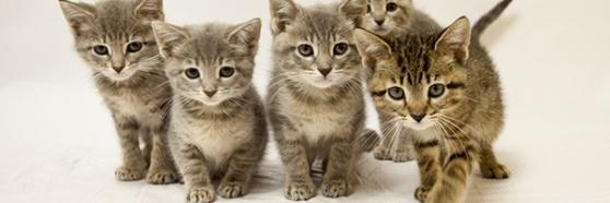 cat-team
